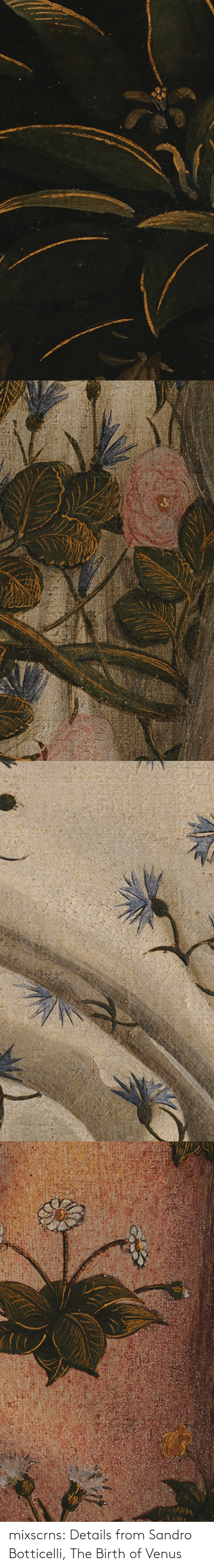 details: mixscrns:  Details from Sandro Botticelli, The Birth of Venus
