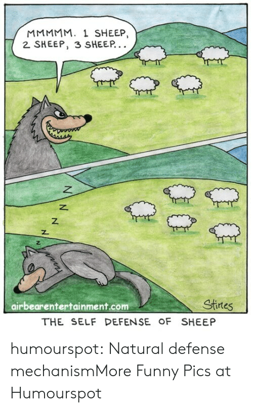 mmmmm: MMMMM. 1 SHEEP,  2 SHEEP, 3 SHEEP  z.  airbearentertainment.com  Stines  THE SELF DEFENSE OF SHEEP humourspot:  Natural defense mechanismMore Funny Pics at Humourspot