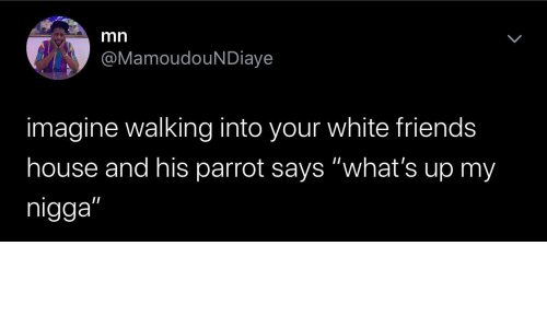 "Says: mn  @MamoudouNDiaye  imagine walking into your white friends  house and his parrot says ""what's up my  nigga"""