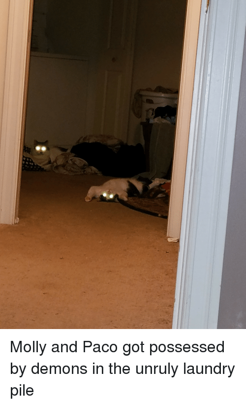 Laundry, Molly, and Got: Molly and Paco got possessed by demons in the unruly laundry pile