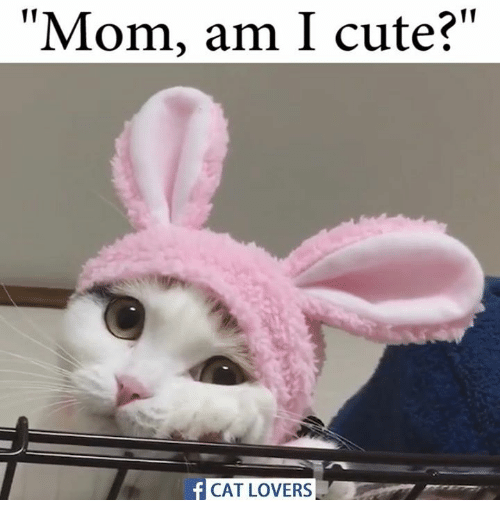 "Memes, 🤖, and Cute Cats: ""Mom, am I cute?""  CAT LOVERS"