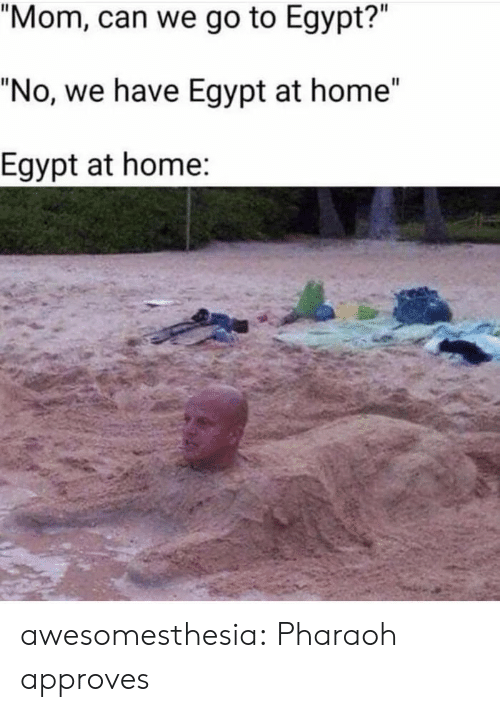 "Tumblr, Blog, and Home: ""Mom, can we go to Egypt?""  ""No, we have Egypt at home""  Egypt at home: awesomesthesia:  Pharaoh approves"