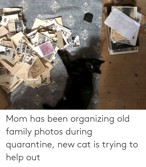 Organizing: Mom has been organizing old family photos during quarantine, new cat is trying to help out