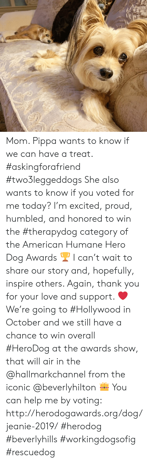 Hallmarkchannel: Mom. Pippa wants to know if we can have a treat. #askingforafriend #two3leggeddogs   She also wants to know if you voted for me today?  I'm excited, proud, humbled, and honored to win the #therapydog category of the American Humane Hero Dog Awards 🏆 I can't wait to share our story and, hopefully, inspire others. Again, thank you for your love and support. ❤️ We're going to #Hollywood in October and we still have a chance to win overall #HeroDog at the awards show, that will air in the @hallmarkchannel from the iconic @beverlyhilton 👑 You can help me by voting: http://herodogawards.org/dog/jeanie-2019/ #herodog #beverlyhills #workingdogsofig #rescuedog