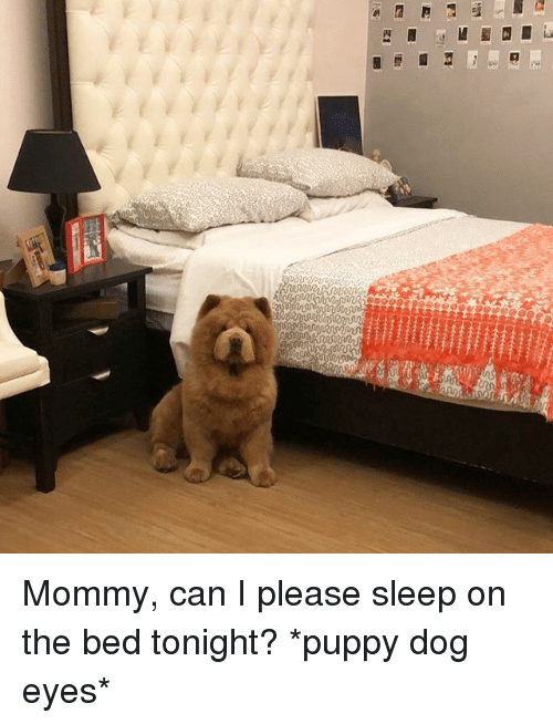 Memes, Puppy, and Sleep: Mommy, can I please sleep on the bed tonight? *puppy dog eyes*