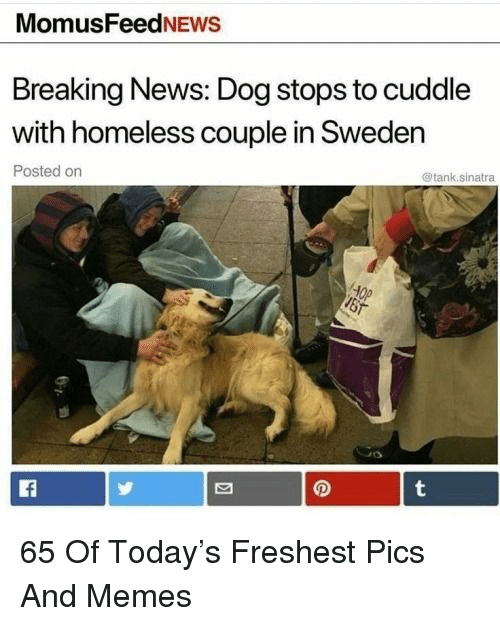 Homeless, Memes, and News: MomusFeedNEws  Breaking News: Dog stops to cuddle  with homeless couple in Sweden  Posted orn  @tank.sinatra  Op 65 Of Today's Freshest Pics And Memes