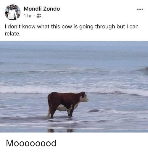 Funny, Cow, and Can: Mondli Zondo  0e  I don't know what this cow is going through but I can  relate. Moooooood