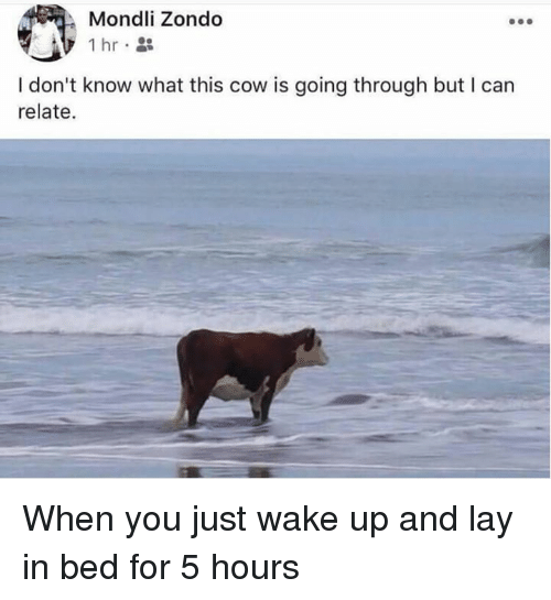Dank, 🤖, and Cow: Mondli Zondo  1hr  I don't know what this cow is going through but I can  relate. When you just wake up and lay in bed for 5 hours