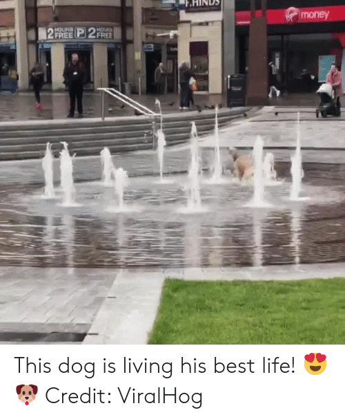 Life, Money, and Best: money  HOLIRD  FREE 2FREE  HOURS  2 This dog is living his best life! 😍🐶  Credit: ViralHog