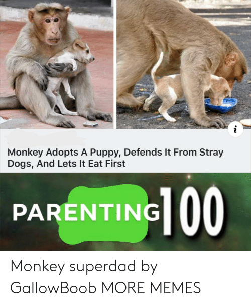 Dank, Dogs, and Memes: Monkey Adopts A Puppy, Defends It From Stray  Dogs, And Lets It Eat First  PARENTING 00 Monkey superdad by GallowBoob MORE MEMES