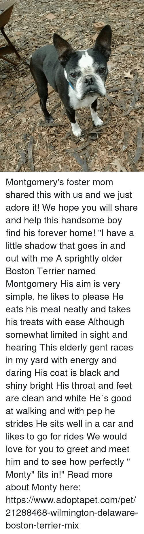 "Energy, Love, and Memes: Montgomery's foster mom shared this with us and we just adore it! We hope you will share and help this handsome boy find his forever home!  ""I have a little shadow that goes in and out with me  A sprightly older Boston Terrier named Montgomery His aim is very simple, he likes to please He eats his meal neatly and takes his treats with ease Although somewhat limited in sight and hearing This elderly gent races in my yard with energy and daring His coat is black and shiny bright His throat and  feet are clean and white He`s good at walking and with pep he strides He sits well in a car and likes to go for rides We would love for you to greet and meet him and to see how perfectly "" Monty""  fits in!"" Read more about Monty here: https://www.adoptapet.com/pet/21288468-wilmington-delaware-boston-terrier-mix"