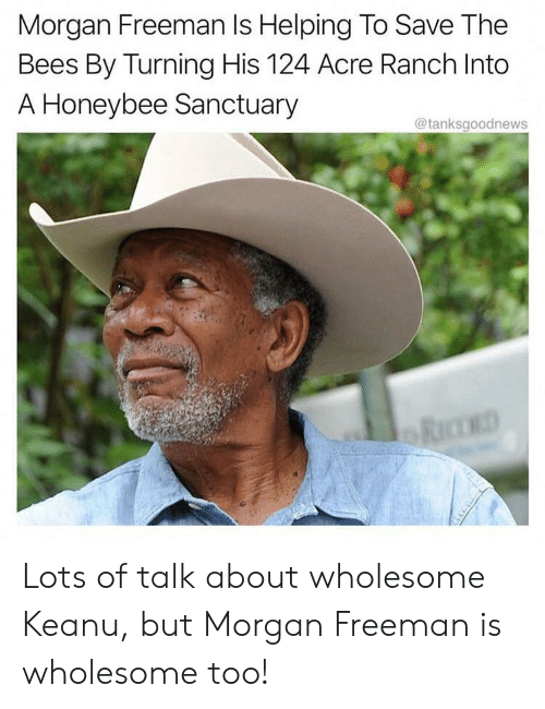 Morgan Freeman, Wholesome, and Bees: Morgan Freeman Is Helping To Save The  Bees By Turning His 124 Acre Ranch Into  A Honeybee Sanctuary  @tanksgoodnews Lots of talk about wholesome Keanu, but Morgan Freeman is wholesome too!