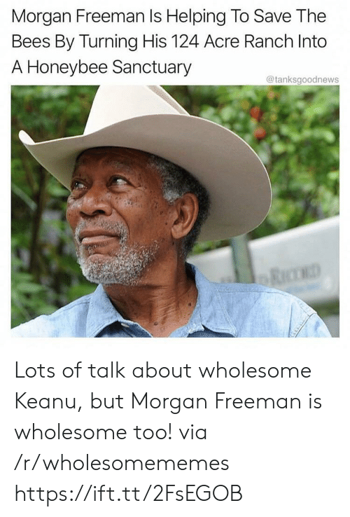 Morgan Freeman, Wholesome, and Bees: Morgan Freeman Is Helping To Save The  Bees By Turning His 124 Acre Ranch Into  A Honeybee Sanctuary  @tanksgoodnews Lots of talk about wholesome Keanu, but Morgan Freeman is wholesome too! via /r/wholesomememes https://ift.tt/2FsEGOB