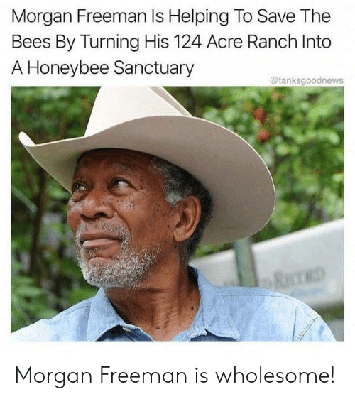 Morgan Freeman, Wholesome, and Bees: Morgan Freeman Is Helping To Save The  Bees By Turning His 124 Acre Ranch Into  A Honeybee Sanctuary  @tanksgoodnews Morgan Freeman is wholesome!