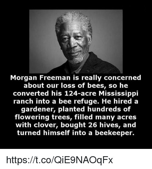 Morgan Freeman, Mississippi, and Trees: Morgan Freeman is really concerned  about our loss of bees, so he  converted his 124-acre Mississippi  ranch into a bee refuge. He hired a  gardener, planted hundreds of  flowering trees, filled many acres  with clover, bought 26 hives, and  turned himself into a beekeeper. https://t.co/QiE9NAOqFx
