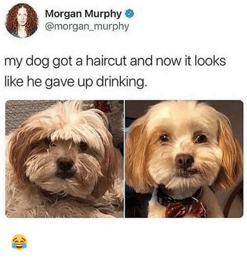 Drinking, Haircut, and Memes: Morgan Murphy  @morgan_murphy  my dog got a haircut and now it looks  like he gave up drinking 😂