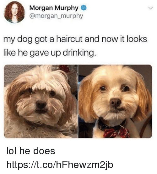 Drinking, Funny, and Haircut: Morgan Murphy  @morgan_murphy  my dog got a haircut and now it looks  like he gave up drinking. lol he does https://t.co/hFhewzm2jb