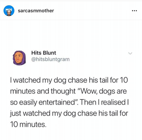 "Dogs, Wow, and Chase: MOS  sarcasmmother  Hits Blunt  @hitsbluntgram  I watched my dog chase his tail for 10  minutes and thought ""Wow, dogs are  so easily entertained"". Then l realised I  just watched my dog chase his tail for  10 minutes."