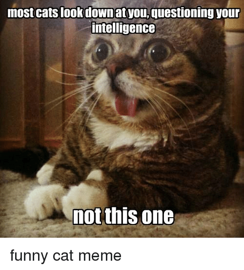 Cat Memes Funny: most cats look down at you, questioning your  intelligence  not this one funny cat meme