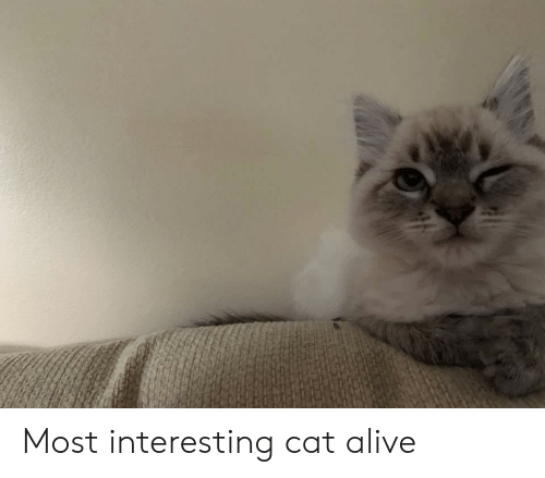 Alive, Cat, and Interesting: Most interesting cat alive