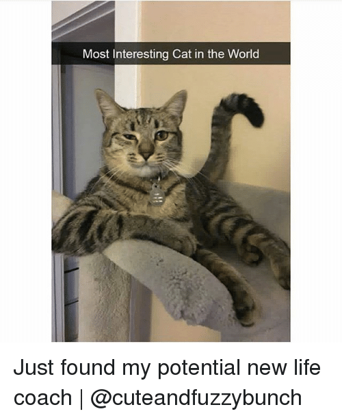 Most Interesting Cat in the World Just Found My Potential ...