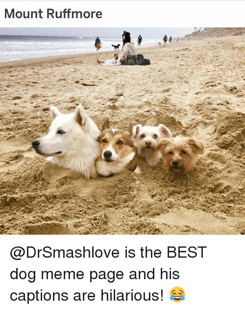 Dog Meme: Mount Ruffmore @DrSmashlove is the BEST dog meme page and his captions are hilarious! 😂