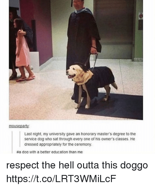 Respect, Masters, and Hell: mousepaty  Last night, my university gave an honorary master's degree to the  service dog who sat through every one of his owner's classes. He  dressed appropriately for the ceremony.  #a doa with a better education than me respect the hell outta this doggo https://t.co/LRT3WMiLcF