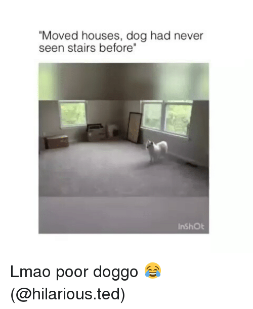 "Funny, Lmao, and Ted: ""Moved houses, dog had never  seen stairs before""  InShOt Lmao poor doggo 😂 (@hilarious.ted)"