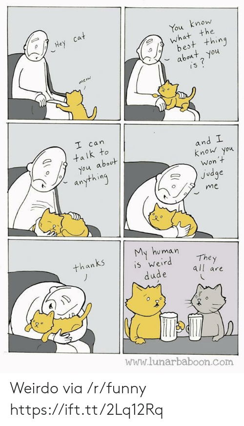 Funny, Com, and Judge: mow  the  ou  est t+hing  bot you  can  an  k to  know you  about  Won  Judge  an  me  u man  The y  all are  an  5 Wer  www.lunarbaboon.com Weirdo via /r/funny https://ift.tt/2Lq12Rq