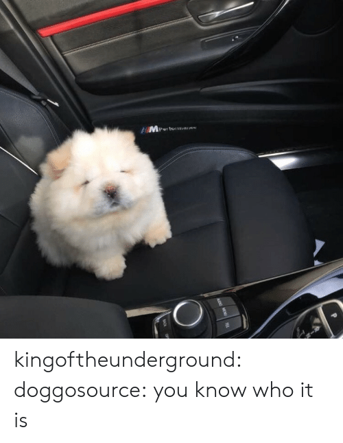 you-know-who: Mr  Pertonans kingoftheunderground:  doggosource: you know who it is