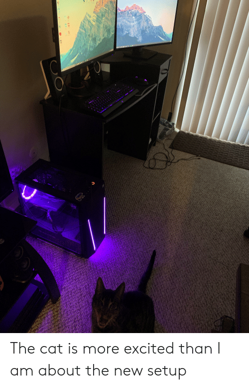 More Excited Than: msi The cat is more excited than I am about the new setup