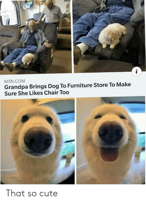 Cute, Grandpa, and Furniture: MSN.COM  Grandpa Brings Dog To Furniture Store To Make  Sure She Likes Chair Too That so cute