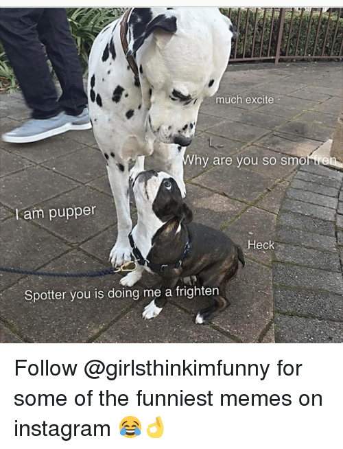 Instagram, Memes, and Excite: much excite  hy are you so smonre  Lam puppen  Heck  Spotter you is doing me a frighten Follow @girlsthinkimfunny for some of the funniest memes on instagram 😂👌