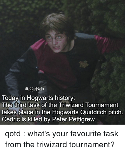 Memes, History, and Today: mugglefacts  Today in Hogwarts history:  The third task of the Triwizard Tournament  takes place in the Hogwarts Quidditch pitch  Cedric is killed by Peter Pettigrew qotd : what's your favourite task from the triwizard tournament?