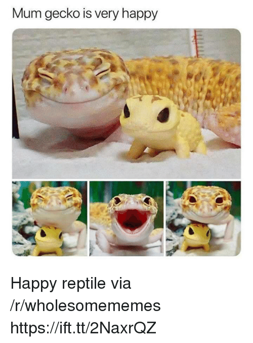 Happy, Via, and Gecko: Mum gecko is very happy Happy reptile via /r/wholesomememes https://ift.tt/2NaxrQZ