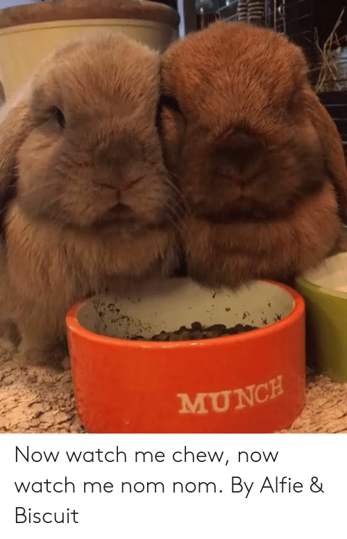 Dank, Watch Me, and Watch: MUNCH Now watch me chew, now watch me nom nom.  By Alfie & Biscuit