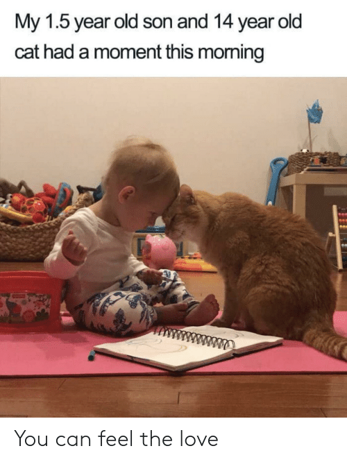 Love, Old, and Cat: My 1.5 year old son and 14 year old  cat had a moment this morming You can feel the love