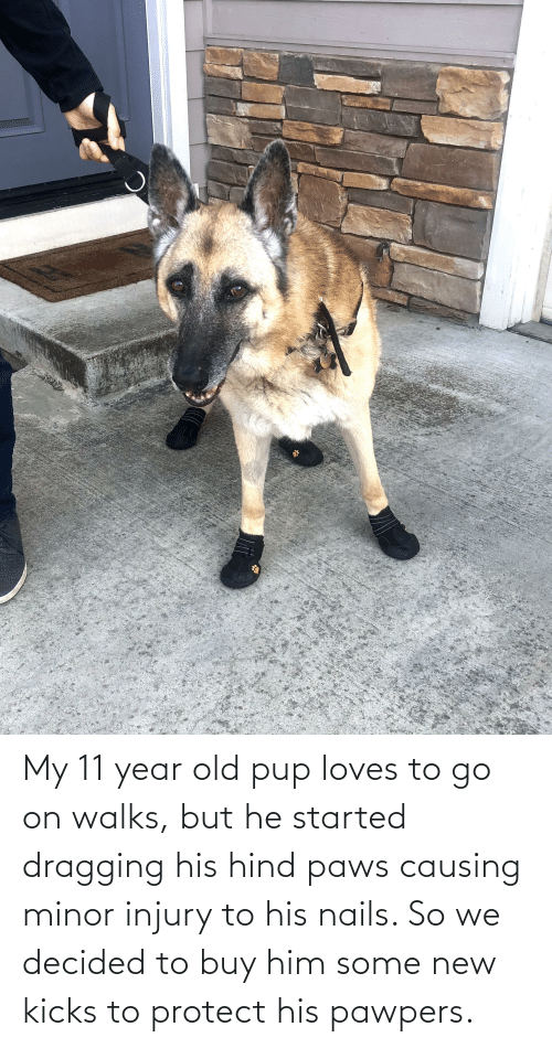 Paws: My 11 year old pup loves to go on walks, but he started dragging his hind paws causing minor injury to his nails. So we decided to buy him some new kicks to protect his pawpers.