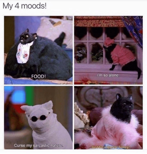 Moods: My 4 moods!  I'm so alone  FOOD!  Curse my sarcastic nature  Just be a Quonj honey!