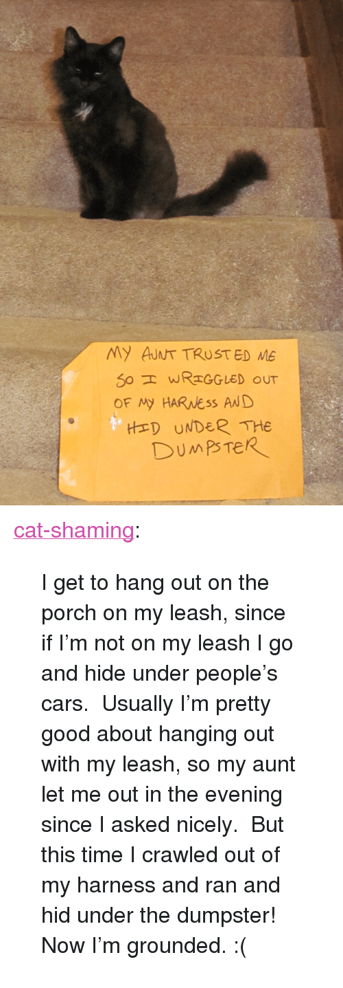 """Cat Shaming: My AUNT TRUST ED ME  S0 WREGGLED oUT  OF My HARNess AND  HED UNDER THe <p><a class=""""tumblr_blog"""" href=""""http://cat-shaming.tumblr.com/post/56993223528/i-get-to-hang-out-on-the-porch-on-my-leash-since"""" target=""""_blank"""">cat-shaming</a>:</p> <blockquote> <p>I get to hang out on the porch on my leash, since if I'm not on my leash I go and hide under people's cars. Usually I'm pretty good about hanging out with my leash, so my aunt let me out in the evening since I asked nicely. But this time I crawled out of my harness and ran and hid under the dumpster! Now I'm grounded. :(</p> </blockquote>"""