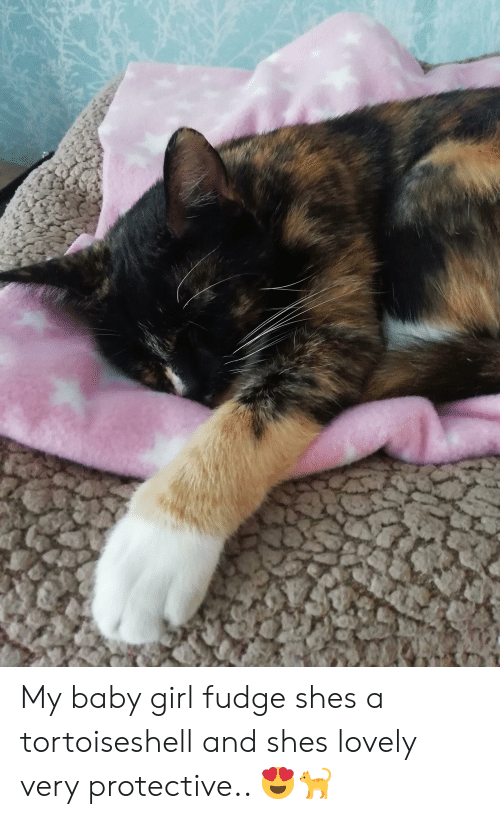 Girl, Baby, and Fudge: My baby girl fudge shes a tortoiseshell and shes lovely very protective.. 😍🐈
