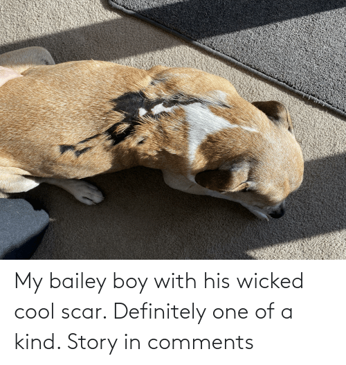 Wicked: My bailey boy with his wicked cool scar. Definitely one of a kind. Story in comments