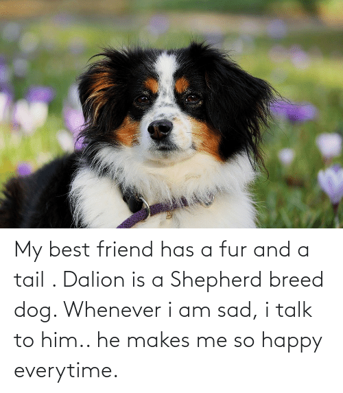 fur: My best friend has a fur and a tail . Dalion is a Shepherd breed dog. Whenever i am sad, i talk to him.. he makes me so happy everytime.