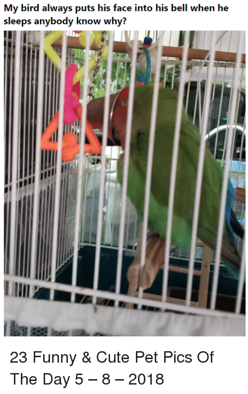 Cute, Funny, and Pet: My bird always puts his face into his bell when he  sleeps anybody know why? 23 Funny & Cute Pet Pics Of The Day 5 – 8 – 2018