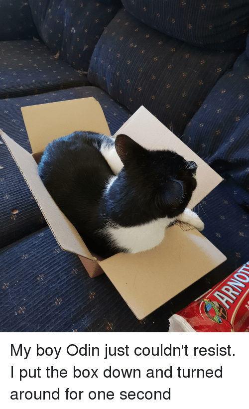 My Boy Odin Just Couldnt Resist I Put The Box Down And Turned