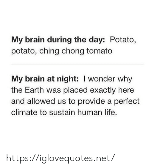 Life, Brain, and Earth: My brain during the day: Potato,  potato, ching chong tomato  My brain at night: I wonder why  the Earth was placed exactly here  and allowed us to provide a perfect  climate to sustain human life. https://iglovequotes.net/