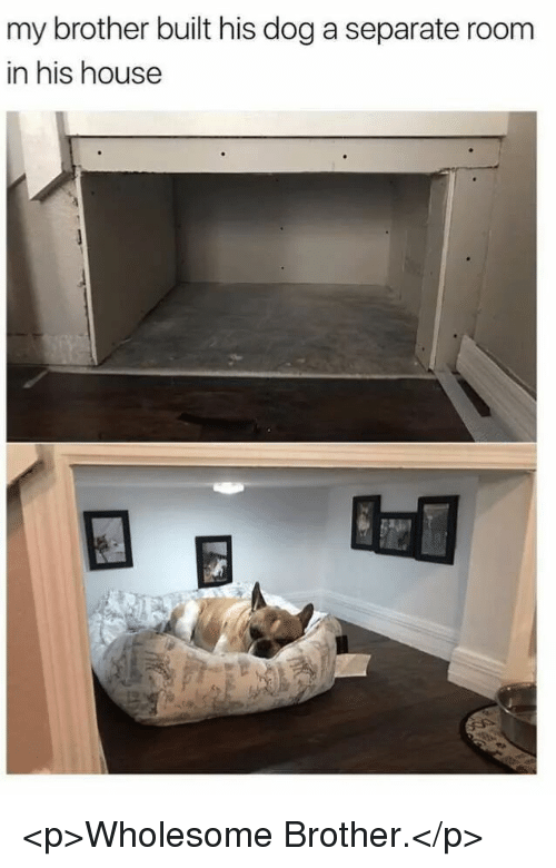 House, Wholesome, and Dog: my brother built his dog a separate room  in his house <p>Wholesome Brother.</p>