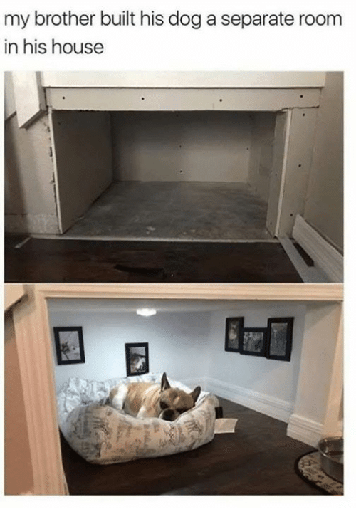 House, Dog, and Brother: my brother built his dog a separate room  in his house