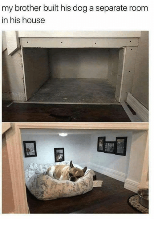 Memes, House, and 🤖: my brother built his dog a separate room  in his house