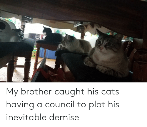 His: My brother caught his cats having a council to plot his inevitable demise
